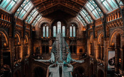 How to Make Museums More Accessible for People with Disabilities?