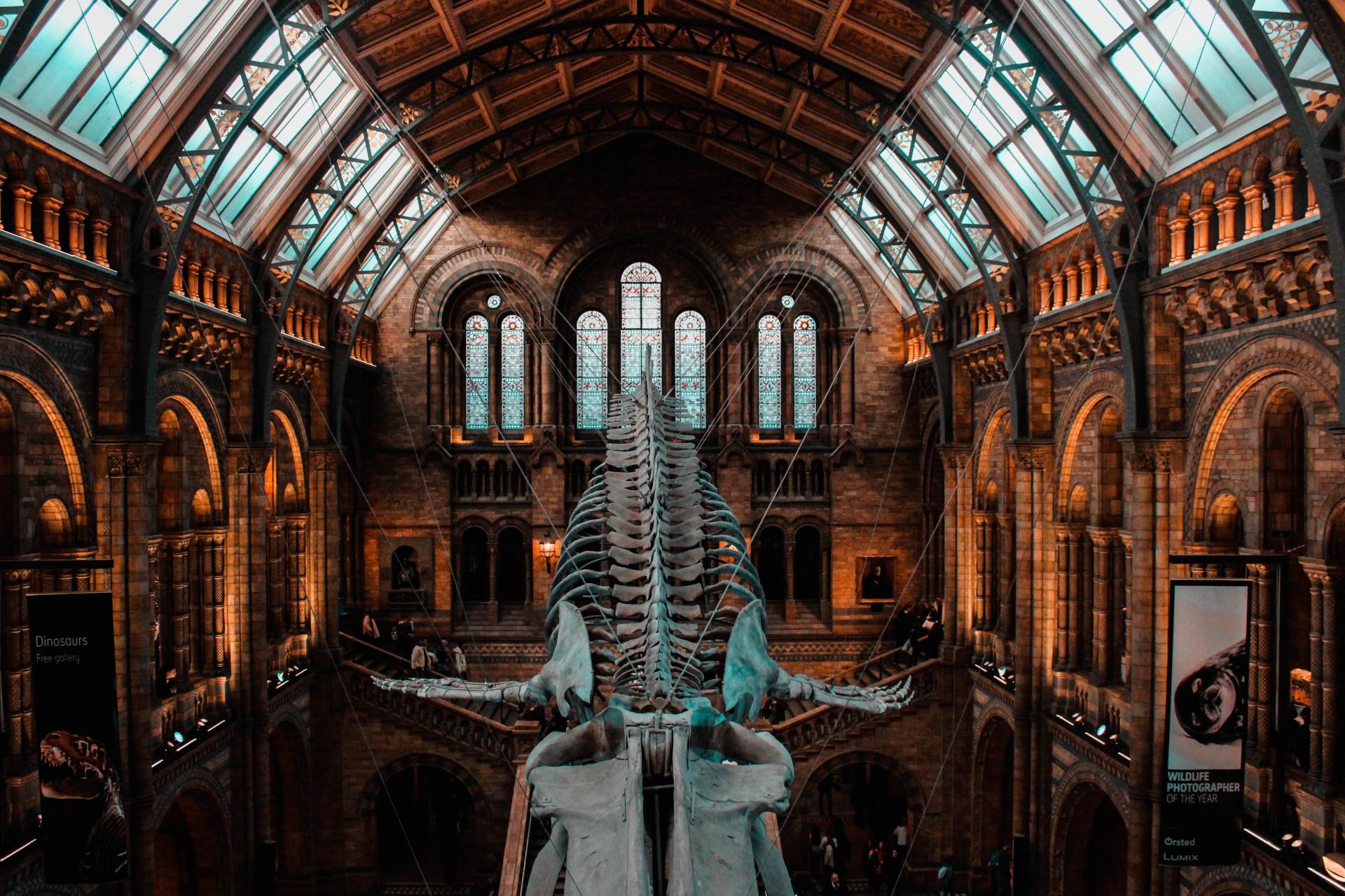 Exhibit of bone dinosaurs